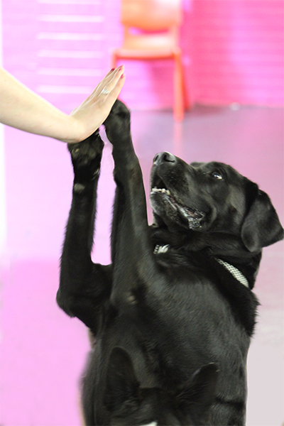 Dog high five